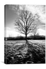 Shadows over snow, Canvas Print