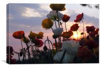 lake geneva sunset, Canvas Print