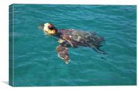 turtle, Canvas Print