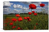 Poppies 4, Canvas Print