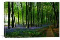 Bluebell wood and path, Canvas Print