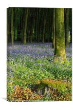 Bluebell wood and stump, Canvas Print