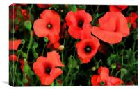 Poppy painting, Canvas Print
