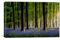Micheldever Bluebells revised, Canvas Print