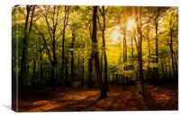 Early Summer Woodland, Canvas Print