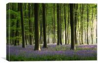 Bluebell wood in Micheldever, Canvas Print