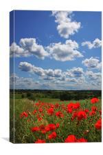 Poppies 2, Canvas Print