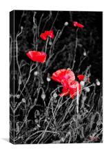 A Hidden Corner of Poppies, West Norfolk, Canvas Print