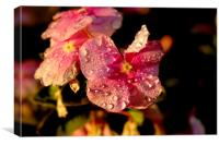 Raindrops on flowers, Canvas Print
