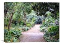 Abbotsbury Subtropical Gardens, Canvas Print
