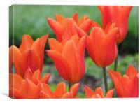 Tiptoe through the Tulips, Canvas Print