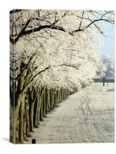 Frosty Trees on the Racecourse in Northampton, Canvas Print