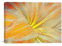 Amaryllis in orange red and yellow - sketch style, Canvas Print