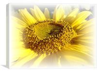 Gentle Sunflower, Canvas Print