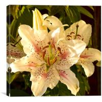 Muscadet Lily, Canvas Print
