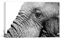 Elephant face, Canvas Print