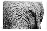 An Elephants tale!