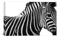 Spot the Stripes, Canvas Print