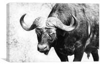 Roaming Buffalo, Canvas Print
