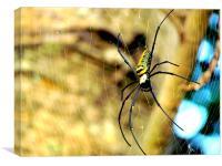 Spider, Canvas Print