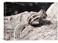 Little Squirrel, Canvas Print