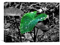 Leaf, Canvas Print