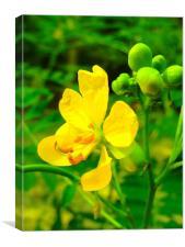 Yellow Yellow, Canvas Print