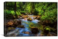 A forest stream., Canvas Print