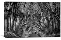 Dark Hedges, Canvas Print