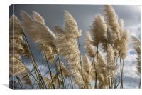 Pampas Grass, Canvas Print