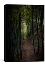 Darkness of the Bamboo Forest, Canvas Print