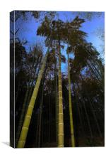 Bamboo Forest at Dusk, Canvas Print