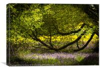Purple, green and gold, Canvas Print