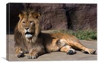 Reclining lion, Canvas Print