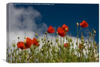 Norfolk poppy, Canvas Print