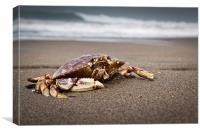 san Francisco Crab