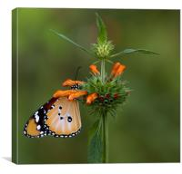Butterfly Series, Canvas Print