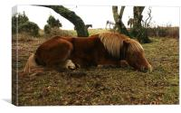 Let sleeping horses lie, Canvas Print