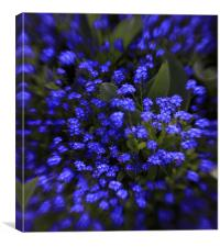 beautiful  blue spring flowers, Canvas Print