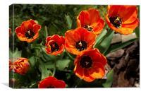 Tulip Cluster, Canvas Print