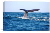 Diving Whale, Canvas Print