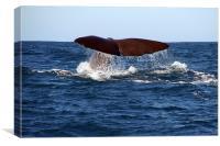 Diving Whale 1, Canvas Print