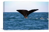 Diving Whale 3, Canvas Print