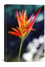Bird-of-Paradise Flower, Canvas Print