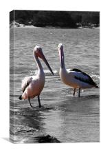 Two Pelicans, Canvas Print