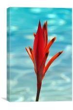Water Flower, Canvas Print