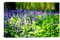 Bluebell Forest, Canvas Print