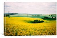 Yellow Field, Canvas Print