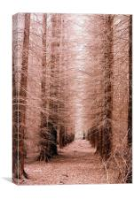 The Tree Cathedral, Canvas Print