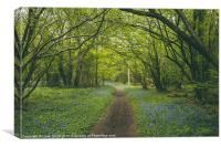 Path through bluebells growing wild in Foxley Wood, Canvas Print